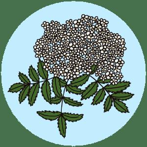 identifying flowering rowan trees