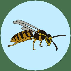 stripey bugs