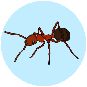 robber ant, learn all about ants
