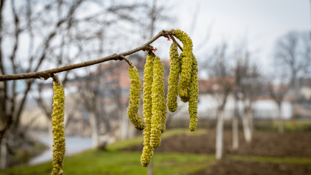 10 things to spot on a february nature walk