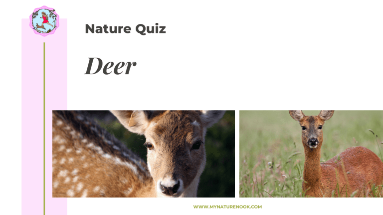 british deer nature quiz