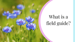what is a field guide?