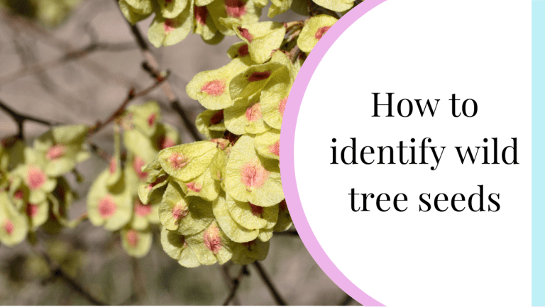 how to identify our most common tree seeds