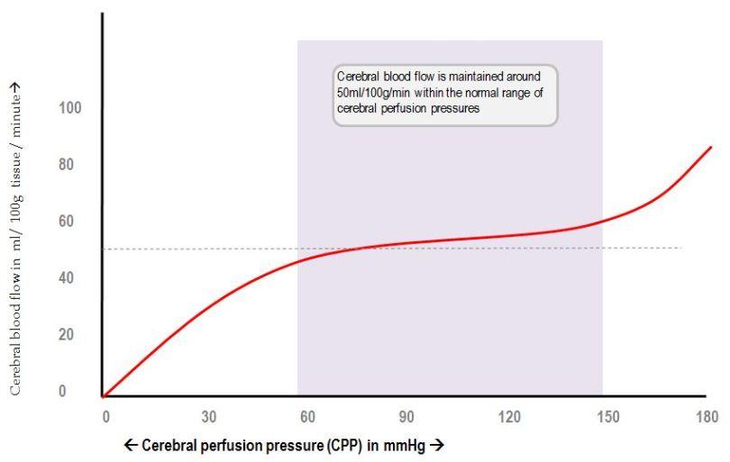 cerebral blood flow autoregulation