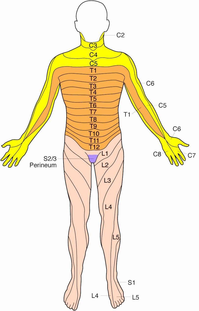 Lumbar disc herniation dermatome anterior lge pooptronica