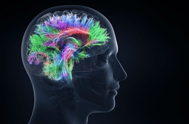 Irwin Naturals Organic Brain Support Diet Supplement Review
