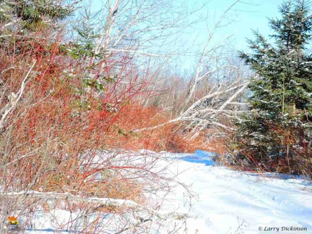 winter walk 015