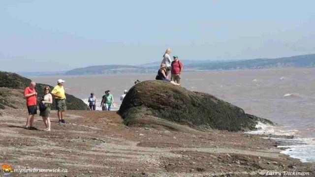 hopewell rocks 005