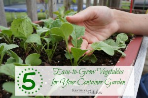 Five Things Tuesday: 5 Easy-to-Grow Vegetables for Your Container Garden