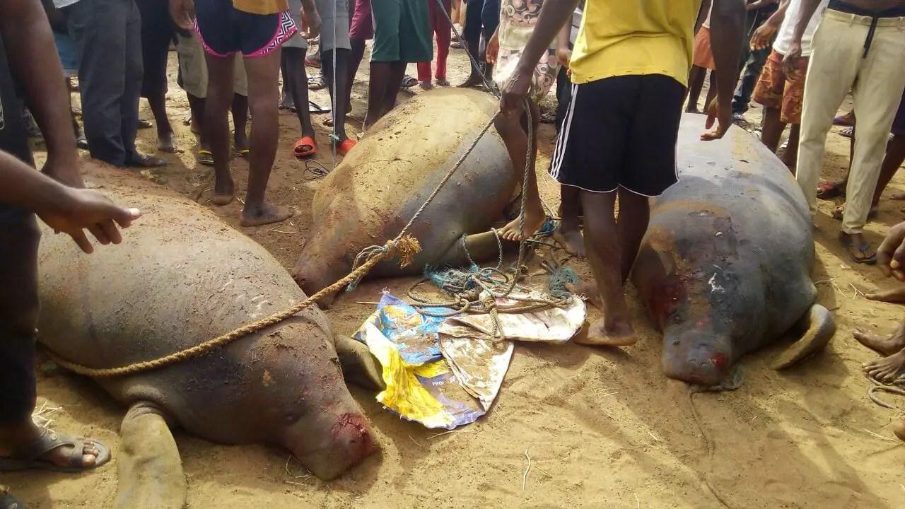 E/R: Fishermen Catch 3 Strange Creatures at Ekye-Amanfrom