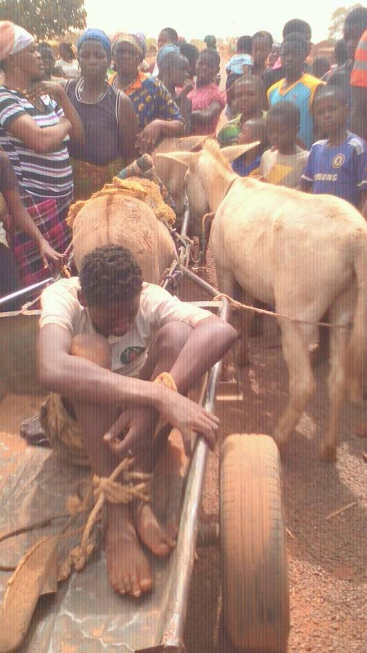 Angry residents prescribe their own punishment to donkey thief