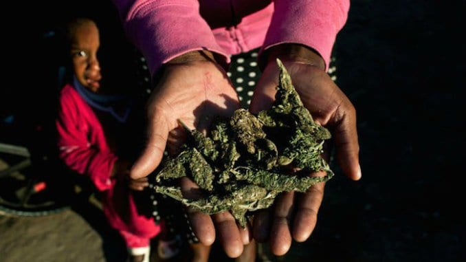 South African High Court gives greenlight for Marijuana use at home