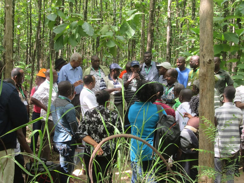 Strengthen private foresters to boost forestry industry – AFF