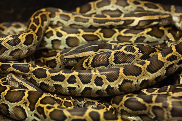 Nigerian university hires snake charmers after student death