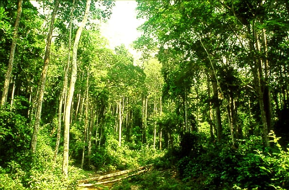 African countries lack 50 % seeds, other planting materials for forestry