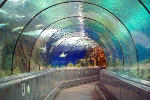 Marinland Aquarium