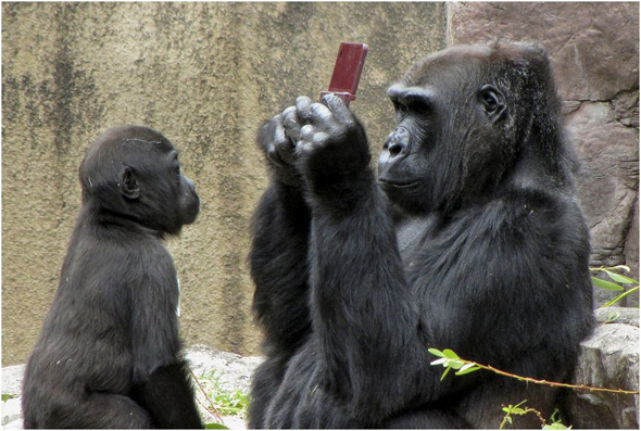 donkey_kong_gorilla_ds