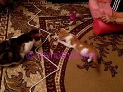Brothers playing :)