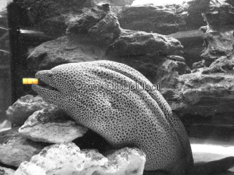 Through the aquarium window - the yellow object in the fish's mouth is actually just a well-placed reflection :)