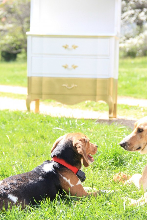 WHITE AND GOLD DIPPED HUTCH - AND MY DOGGIES KEEPING ME COMPANY