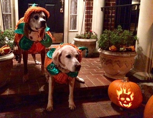 OLLIE AND SOPHIE ON HALLOWEEN