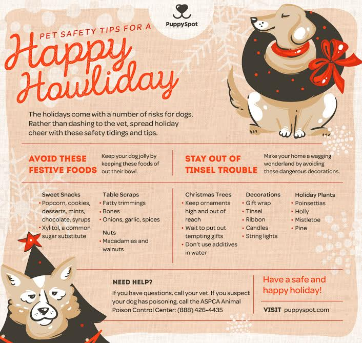 HOLIDAY TIPS TO KEEP PETS SAFE