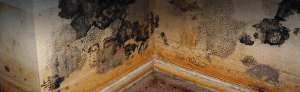 mold-home-inspections