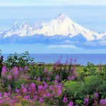 /Users/sarah/Documents/Upwork /June Vacations/Kenai Photos/Summer in Alaska.jpg