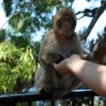 Monkey opening Martin's hand 1
