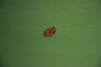 Frog in room