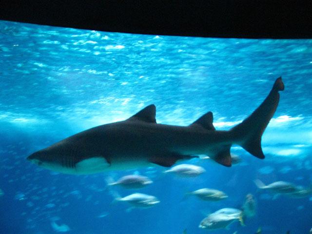 Lisbon - Aquarium