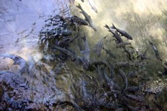 Fish Cave