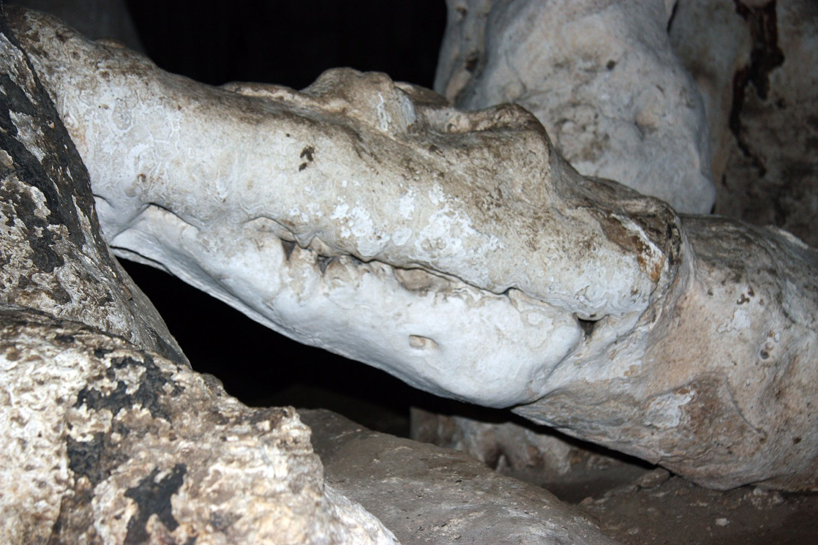 Tham Lot Cave-crocodile