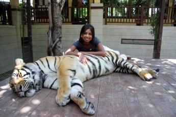 Big cat 200kg