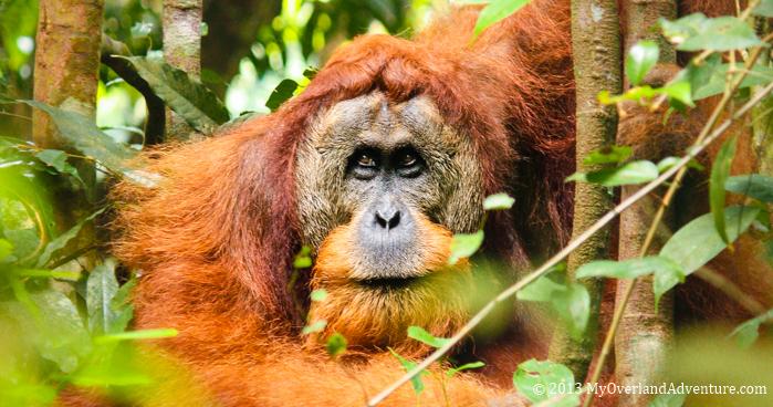 Indonesia – North Sumatra