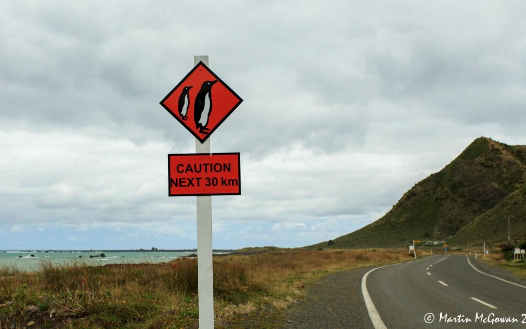 NZ Wellington & Around