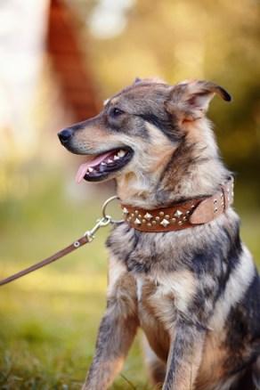 Portrait of a watchdog.