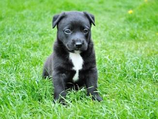 Cute Yorkshire terrier