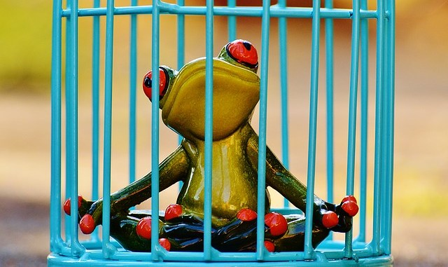 toad in cage