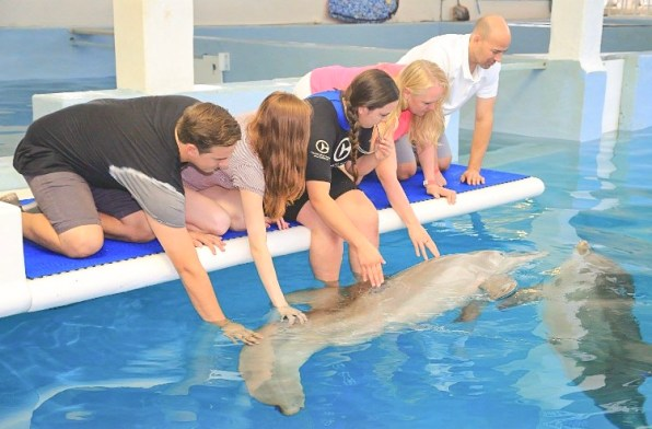 winter the dolphin at clearwater marine aquarium