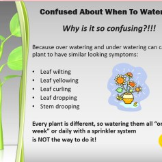 plant watering; overwatering; underwatering