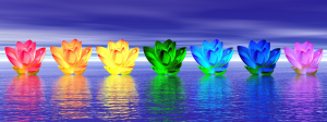 chakra-colored lilies on water