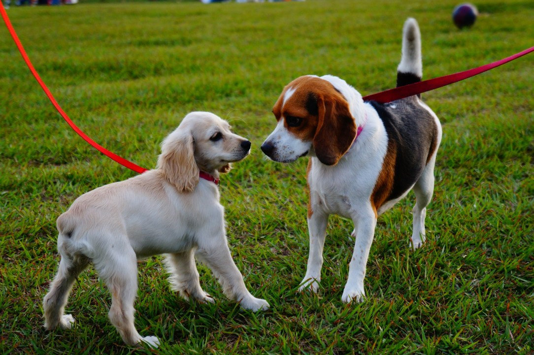 Two dogs playing in a park