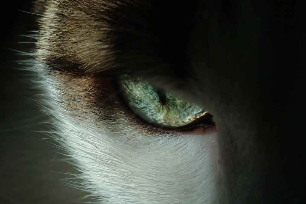 image of a cat in a predatory mode