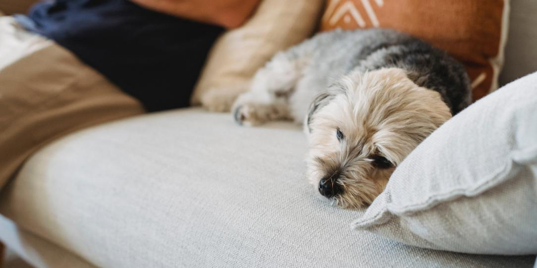 Sad dog in the article 5 Signs Your Dog Is Depressed and the Causes Behind the Same