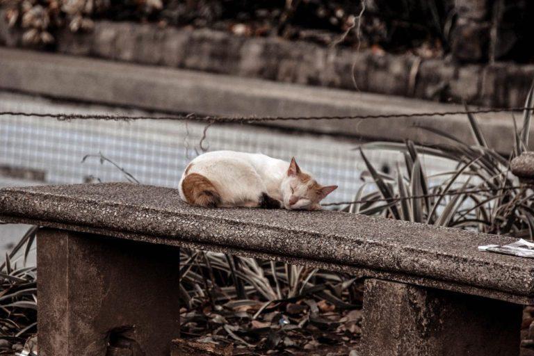 Os perigos das ruas para os gatos