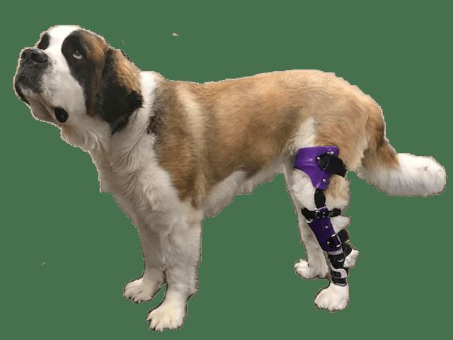 Knee Braces for Rear Legs 3