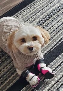 Dog - Bilateral Carpal Braces