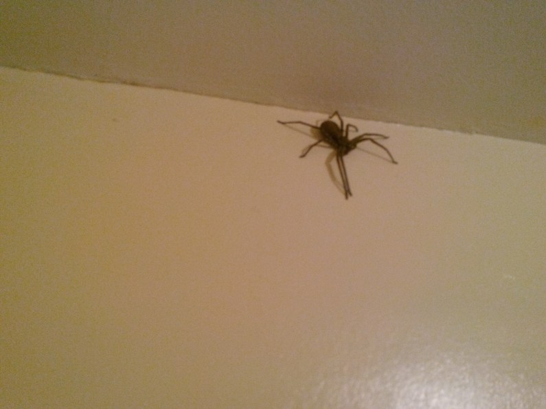 Female Huntsman in Bathroom (CR)
