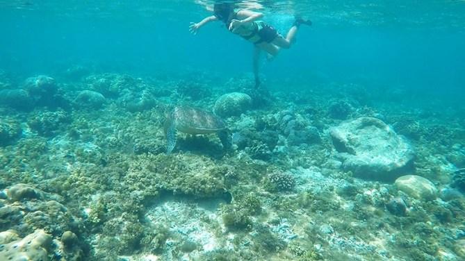 Apo Dina over Turtle